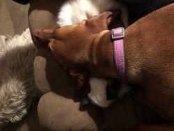 EV sleeping on Oakley