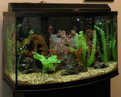 46 gallon Bow-front Freshwater