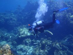 Ann diving in the Fowl Cay marine park