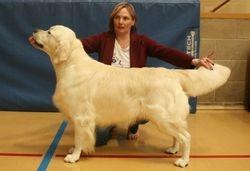 Winner of Yearling Dog
