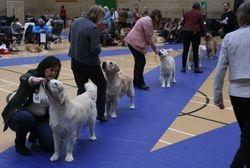 Graduate Dog Lineup