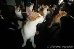 Cats in Malayan sun bear station