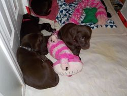 Lexie and Hazel (Pink)