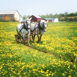 Plowing for Hops