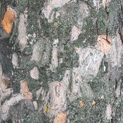 Elm Park abstract photograph