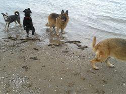 Morgan, Reuben, Tyson & Oscar