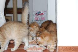 Kattungene er glad i mat og ble tatt godt vare på!