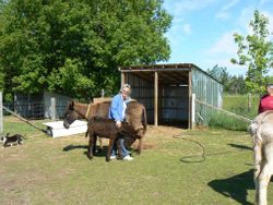 Sara and baby Lily getting Equine Reiki