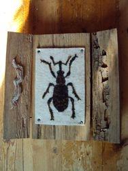 Koppakuoriainen, Beetle