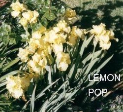 LEMON POP  $5