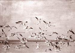 Sea Gulls - Vintage