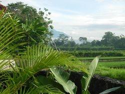 Garden terras view
