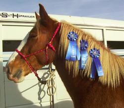 Undefeated - 1st Western Dressage Show!