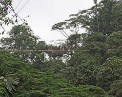 Hanging Bridge at Arenal