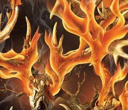 WTP 648 Legends Blaze
