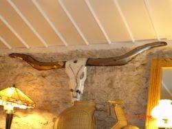 Long horn skull