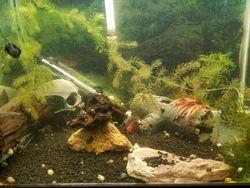 Jim Stanford Aquarium