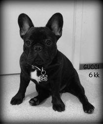 Gucci 6kk