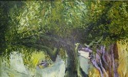 Olivenbaum Toscana
