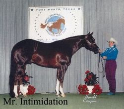 Mr. Intimidation