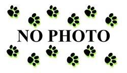Banfield Puppy