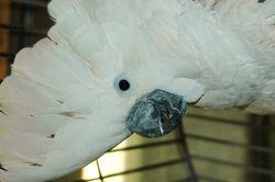 Gabby-Pending Adoption