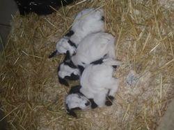 Deja x willy triplet boys!