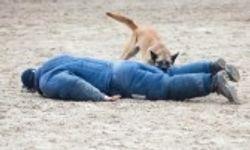 Passive apprehension training