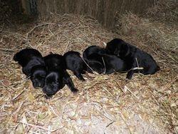 6 Black Females