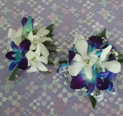 Blue and white sinapore orchids