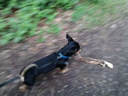 Me and my stick!