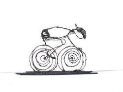 wielrenner nieuw 9