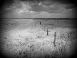 Wheat Fence Line BW
