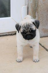 Fugly at 9 weeks