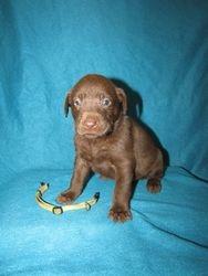 4 Weeks Old - Yellow Collar Female