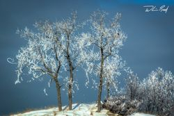 Icy Trees on the Channel