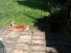Pip sunbathing