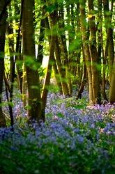 Slindon Woods