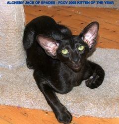 2008 Kitten of the Year