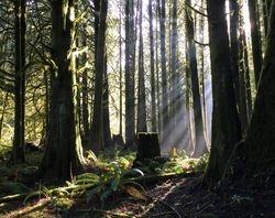 Cedar Forest in Oakville