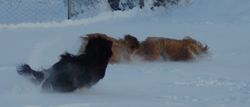 Oh yes snow it`s fun !!
