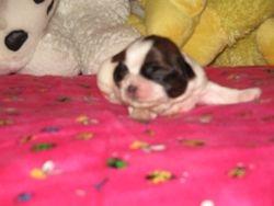 Girl two weeks