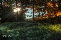 Meinert Park Autumn