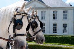 Paarden Stefaan Lecluyse