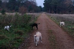 Forest with Toto, Jack and Jess