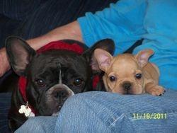 Tiny & her puppy Tidd Bitt