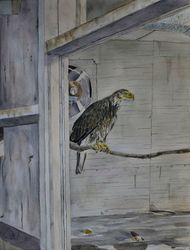 "In the Hawk House (12 by 16"" watercolour on paper)"