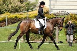 Dressage - NZPC80