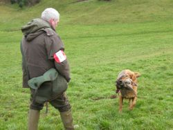 Open field trial at Horningsham 20th Dec 2011