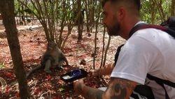 Matthew Gardiner testing token preference in a long-tailed macaque (Uluwatu, Bali, Nov. 2019)